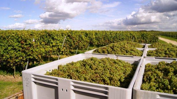 Winnica Turnau. Zdjęcie: materiały prasowe